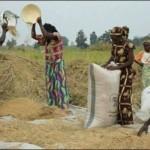 المضراية -لنظافة الذرة  والحبوب من الشوائب